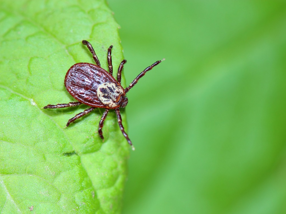 tick control services in Pflugerville